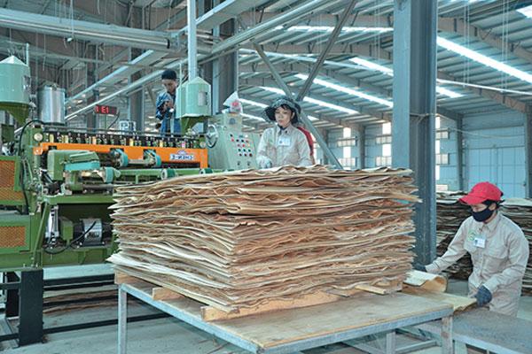 Ảnh thực tế nhà máy sản xuất MDF ướt tại Việt Nam